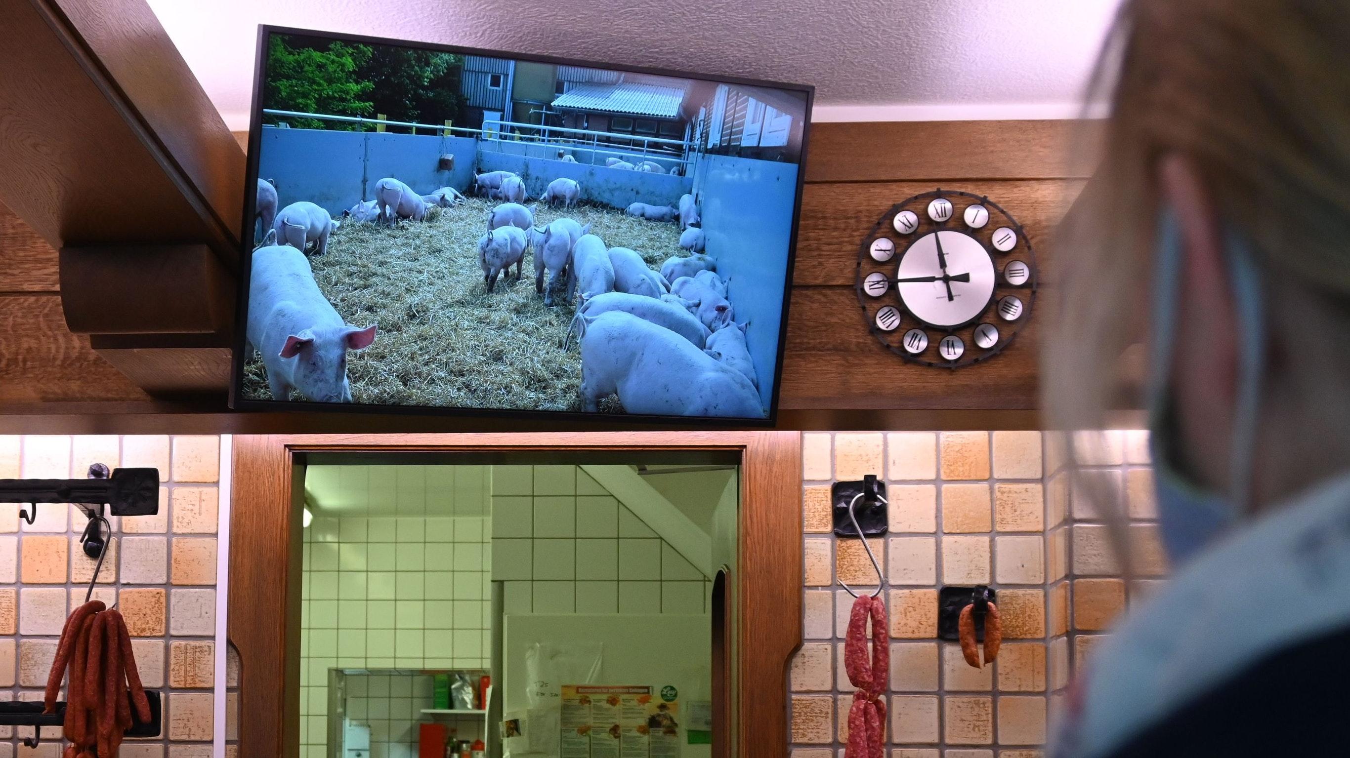 """Auslauf und frische Luft: Das Prinzip der """"Offenställe"""" wird den Kunden auf einem großen Bildschirm gezeigt. Foto: Thomas Vorwerk"""
