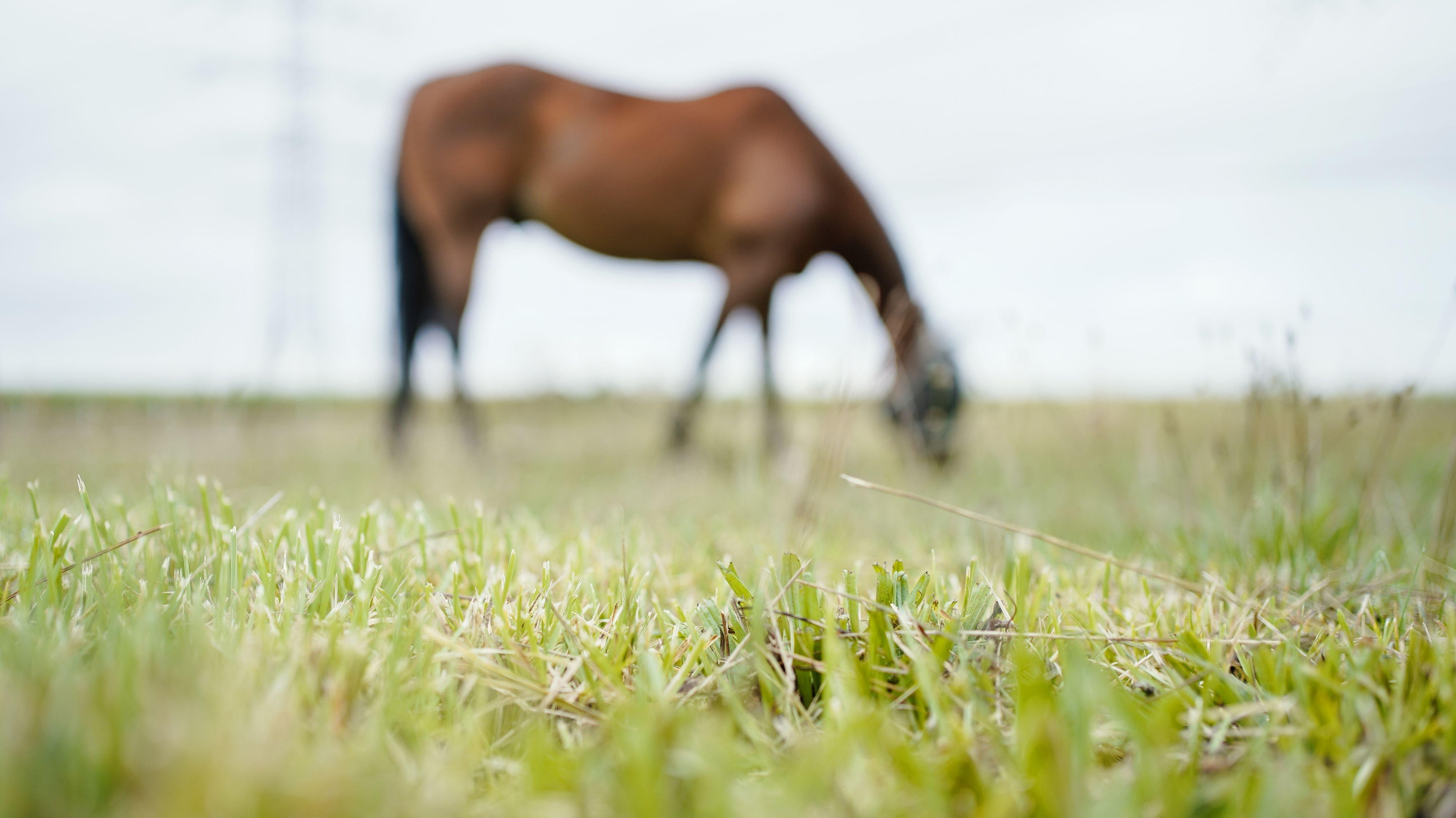 Mehr als 100 Pferde, die ihrem Halter aus Tierschutzgründen weggenommen wurden, werden nun versteigert. Foto: dpa/Anspach
