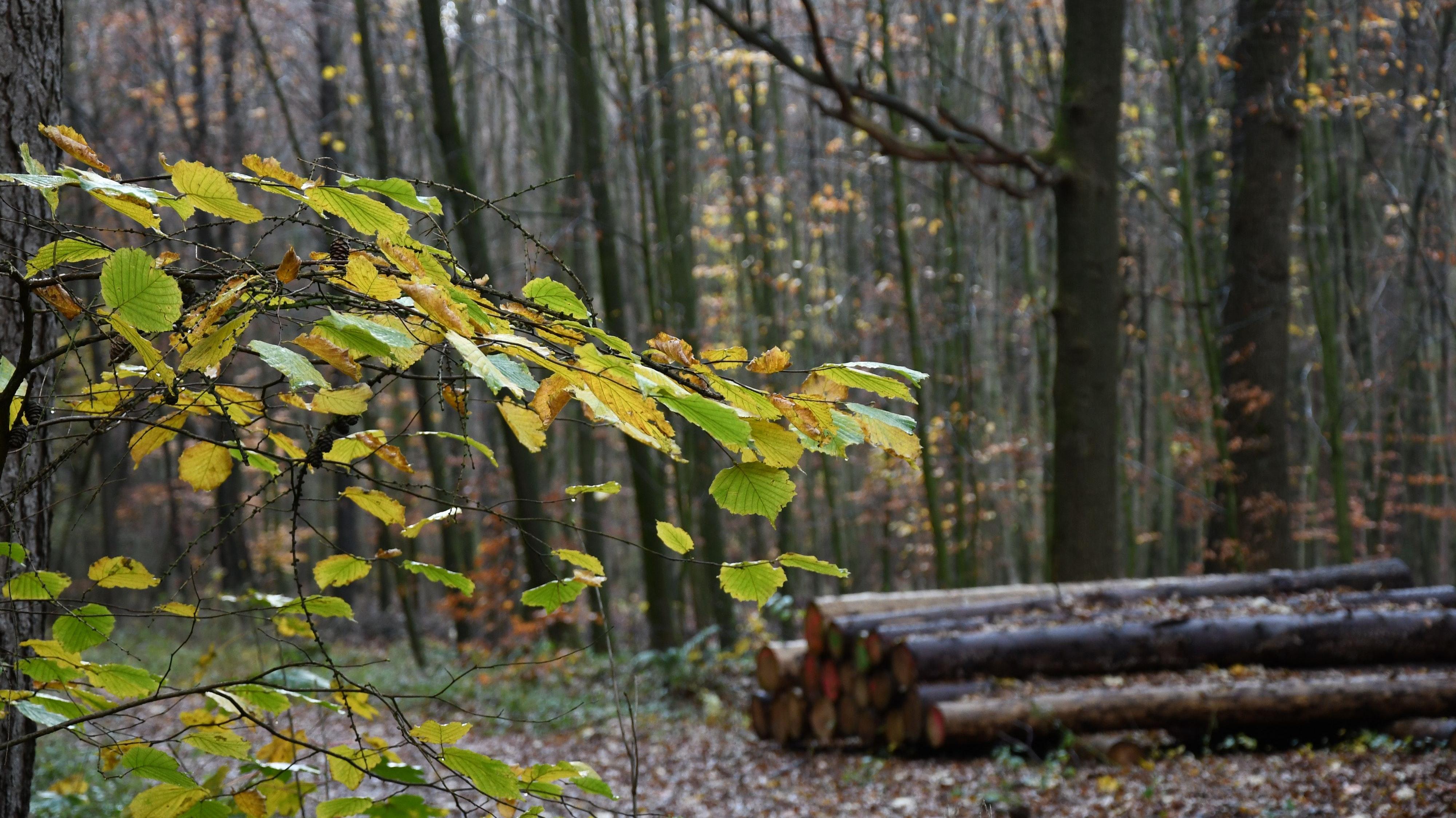 Der letzte Weg  vorerst versperrt: Die Bührener Tannen sind geeignet als Bestattungswald, aber es wird weiter gestritten. Foto: Kreke