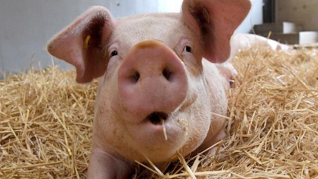 Region spricht bei Umbau der Tierhaltung mit