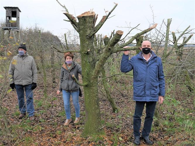 Tristes Bild: Bruno Lewandowski (von links), Hildegard Werner und Franz-Josef Nienaber sind empört über die Verstümmelung von hunderter Bäumen. Foto: Schmutte