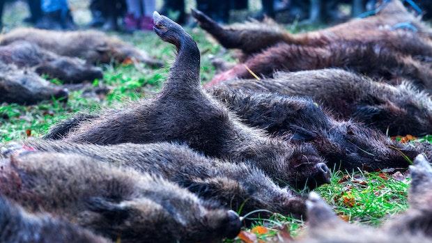 Jäger sollen auf das Schüsseltreiben verzichten