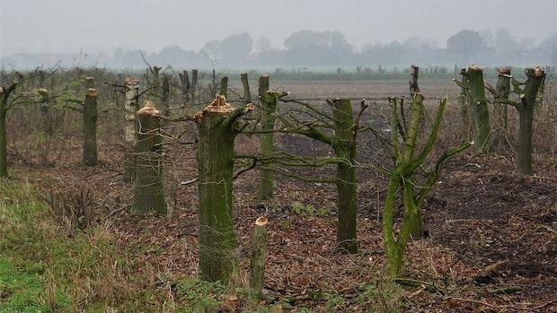 Kahlschlag im Moor: Naturschützer fordern hohes Bußgeld