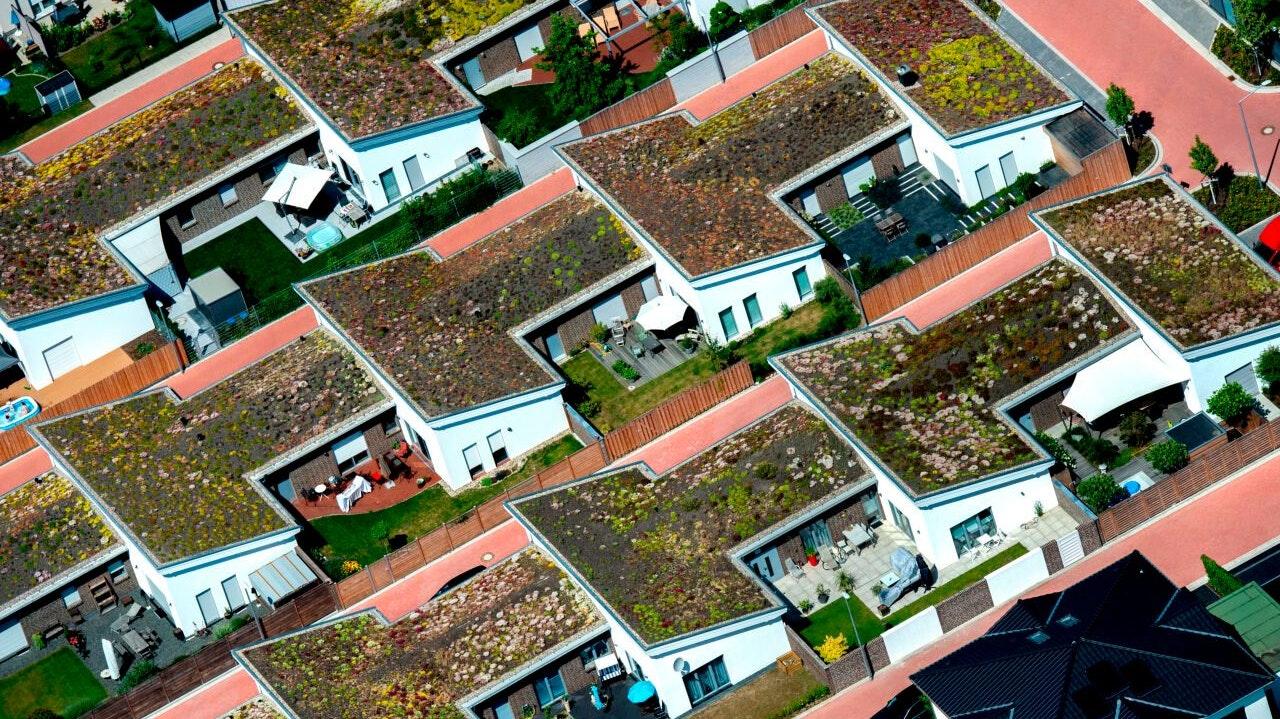 Immer öfter in Deutschland zu sehen: Die Zahl der Gebäude mit begrünten Dächern steigt. Geht es nach Heinrich Hoppe, werden solche Dächer zukünftig auch in Neuenkirchen-Vörden zum alltäglichen Bild gehören. Foto: dpa/Dittrich
