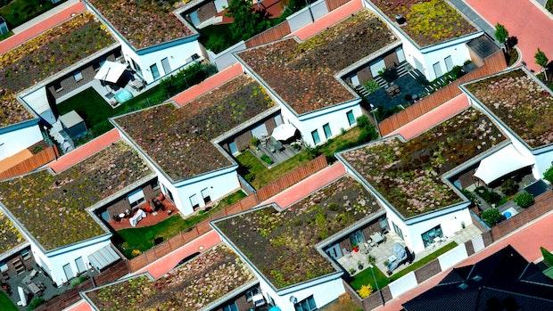 Hoppe setzt auf ganz viele begrünte Dächer