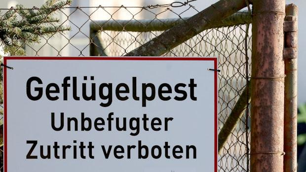 Geflügelpest: Weiterer Ausbruch in Garrel