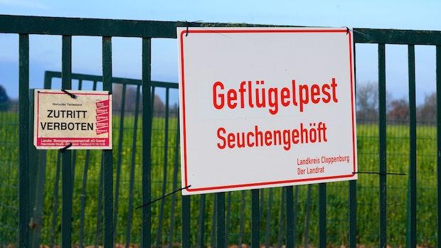 Geflügelpest an der Grenze zum Kreis Vechta