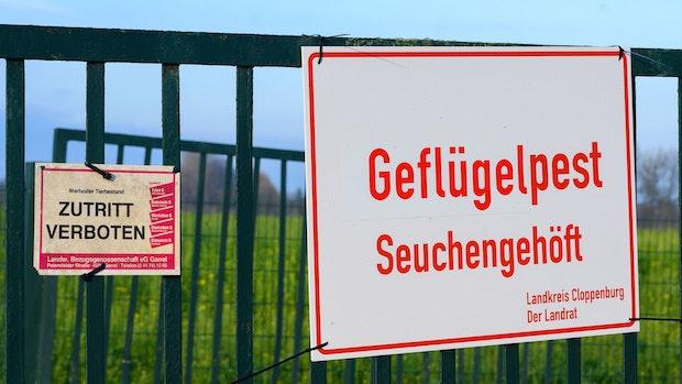 Geflügelpest: 2 weitere Betriebe in Garrel sind betroffen