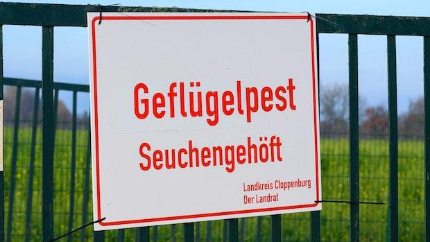 Geflügelpest: Weiterer Fall in Garreler Betrieb