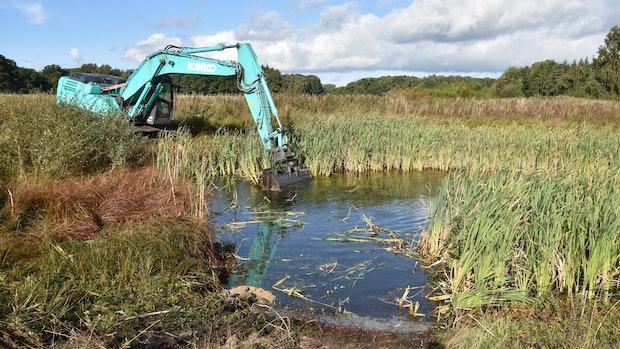 An der Hunte entsteht mehr Platz für Amphibien