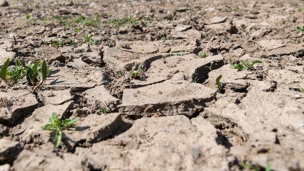 April 2020 war der zweittrockenste Monat in diesem Jahrtausend