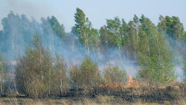 Waldbrandgefahr: Das gilt ab Freitag im Landkreis Vechta