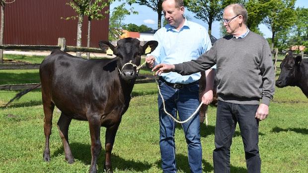Garreler Wagyu-Rind für 50.000 Euro versteigert
