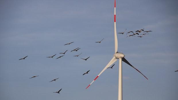 Windräder jetzt auch in Wäldern möglich