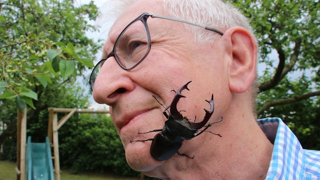 Zwei, die sich mögen: Werner Schiller ist immer wieder fasziniert von Hirschkäfern. Seit 2005 hat er sie jedes Jahr von Mai bis in den Sommer genaustens im Blick. Foto: Lammert