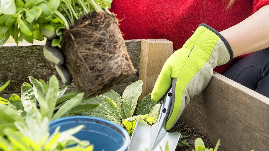 Bequem und rückenschonend Einpflanzen Foto: dpaGünther