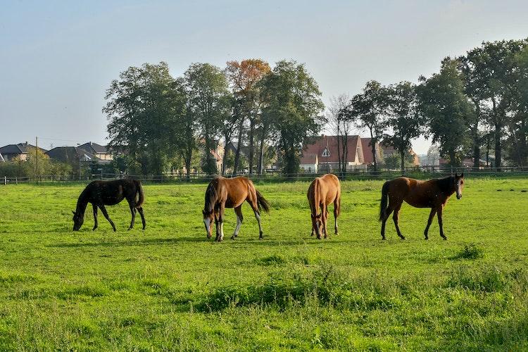 Noch eine Pferdewiese, bald ein Bürgerpark: Das ist die Grünfläche am Ostring in Holdorf. Foto: Vollmer