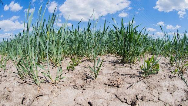 Bericht: Dürre hat Folgen für Grundwasser