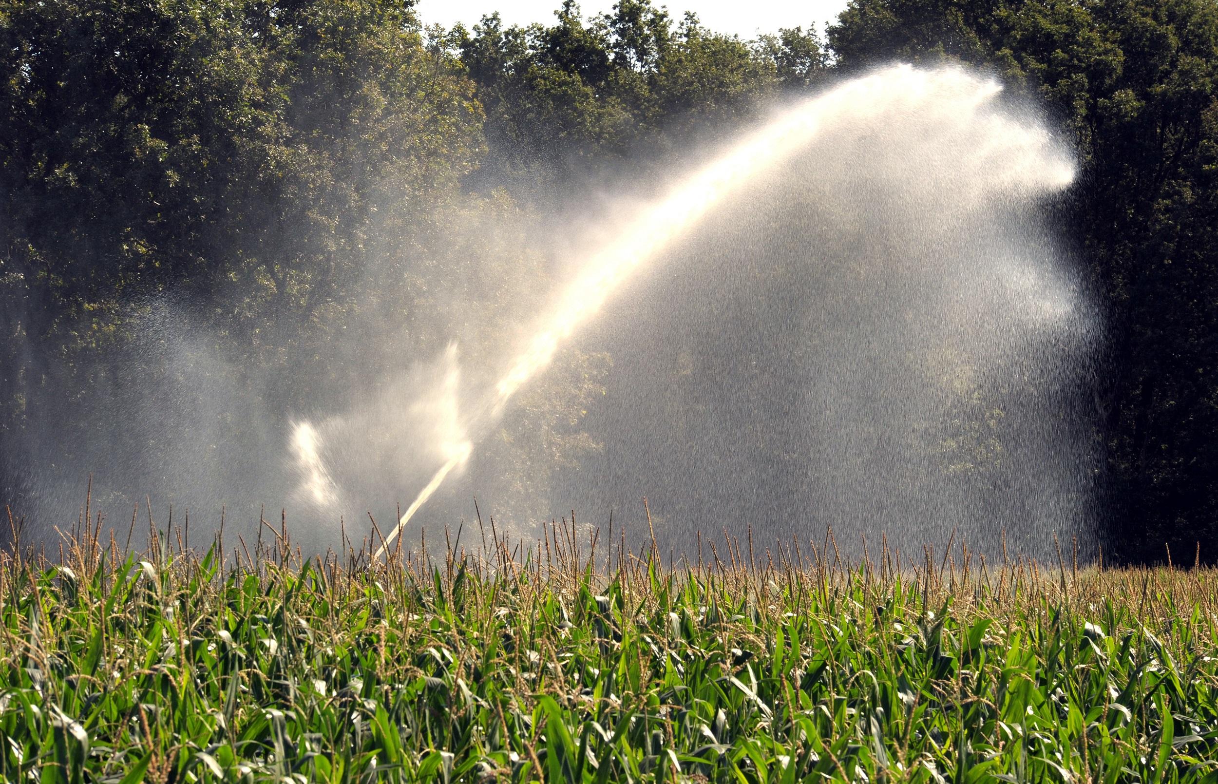 Beregnung eines Feldes: Ein großer Teil verdunstet in der Tageshitze. Foto: dpa/Hollemann