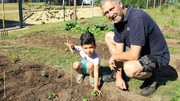 Flüchtlinge ernten eigenes Gemüse