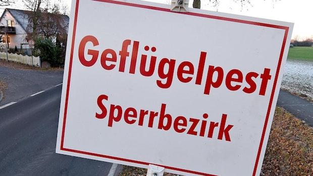 Können die Geflügel-Züchter im Landkreis Cloppenburg aufatmen?