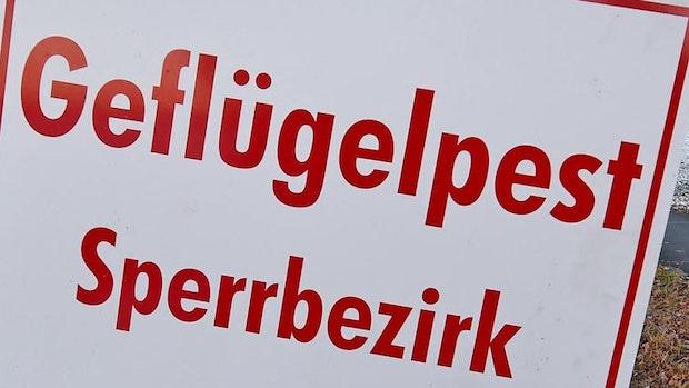 Geflügelpest: Weitere Ausbrüche in 4 Betrieben im Kreis Cloppenburg