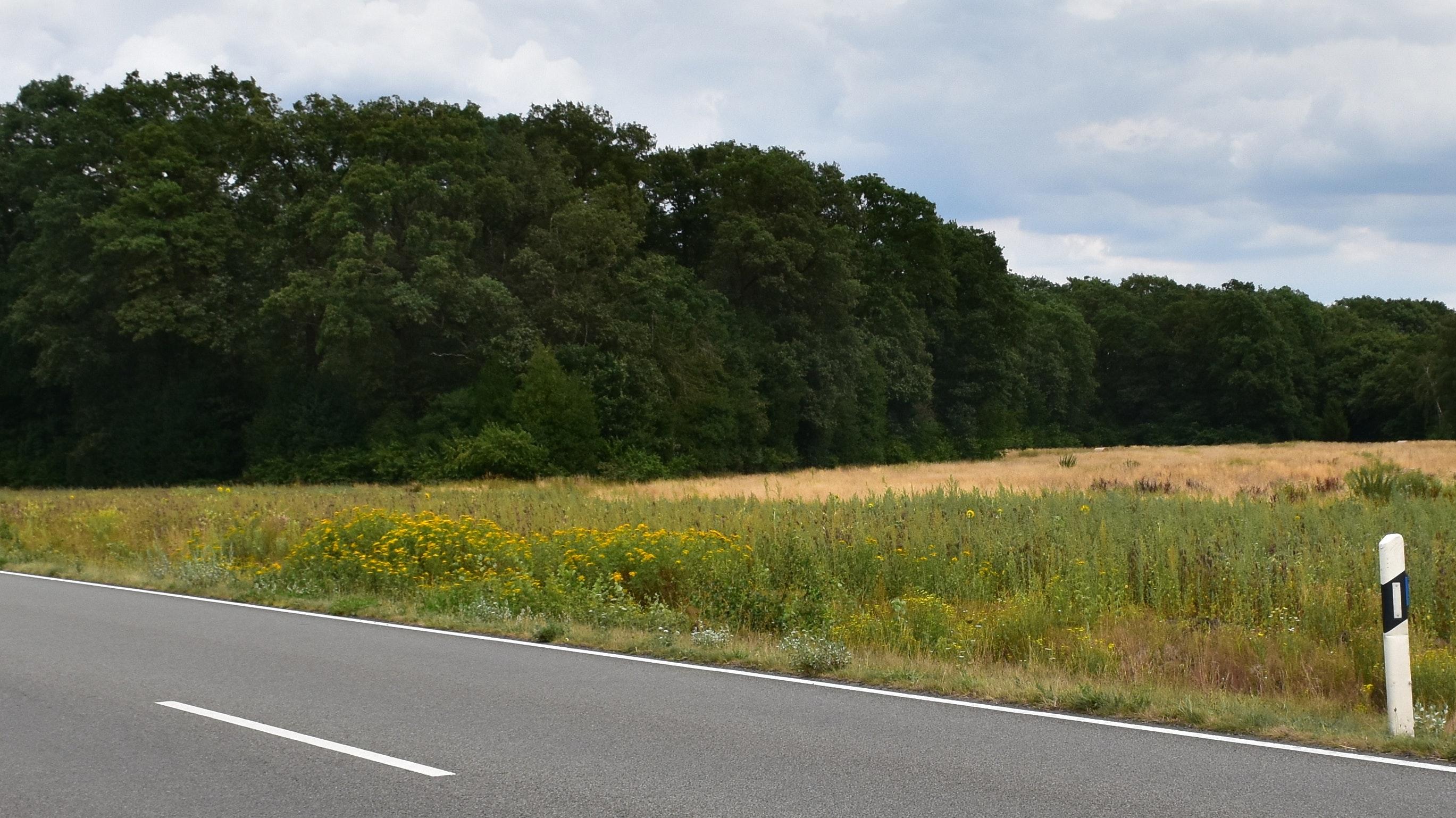 Der Wald bleibt, aber die Ackerfläche rechts davon soll einem Gewerbegebiet weichen. Archivfoto: Böckmann