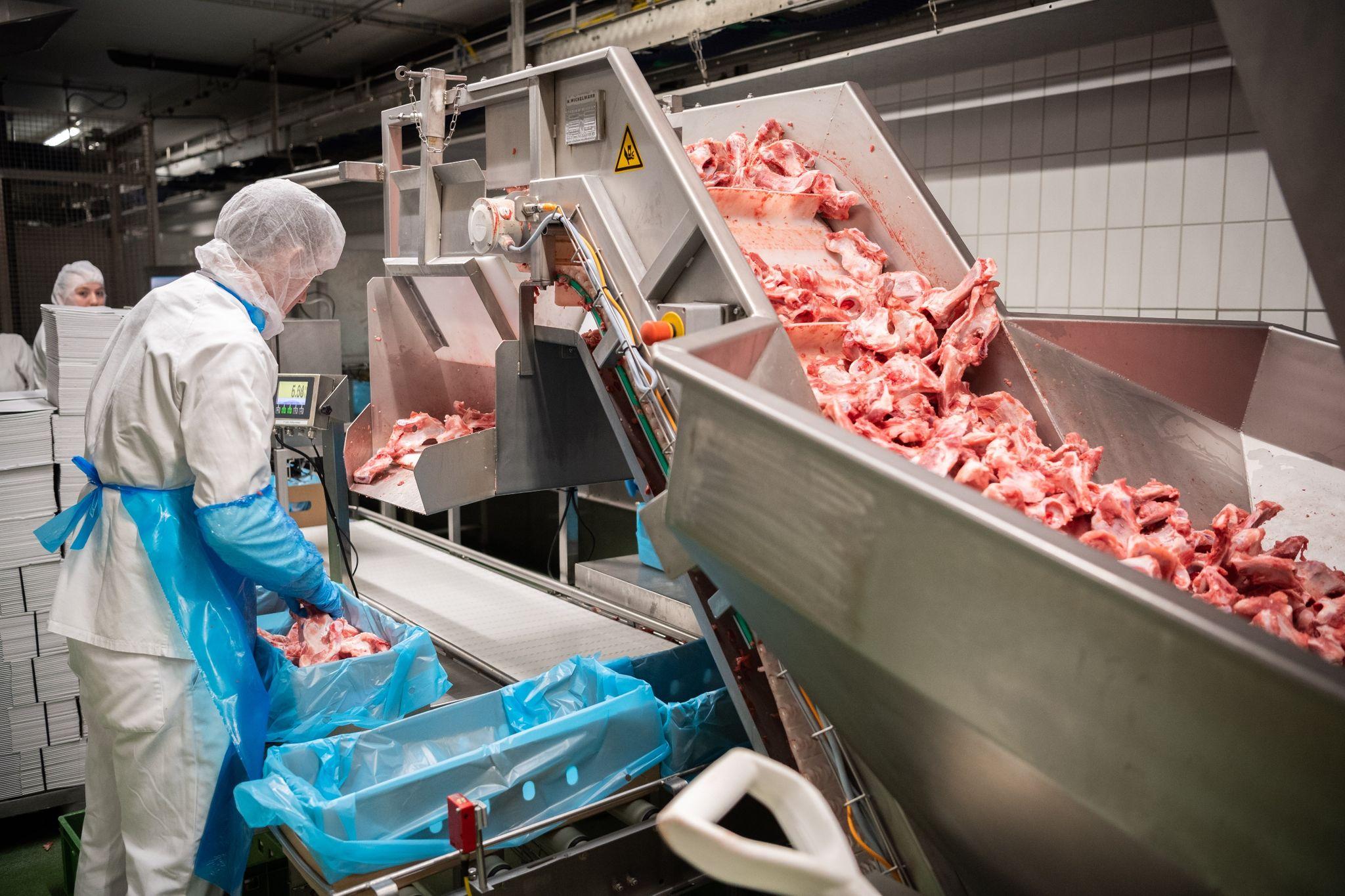Ab 2021 darf in der Fleischindustrie nicht mehr mit Leiharbeit oder Werksverträgen gearbeitet werden. Foto: Mohssen Assanimoghaddam / dpa