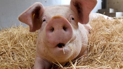 Bundestag fordert Umbau der Tierhaltung