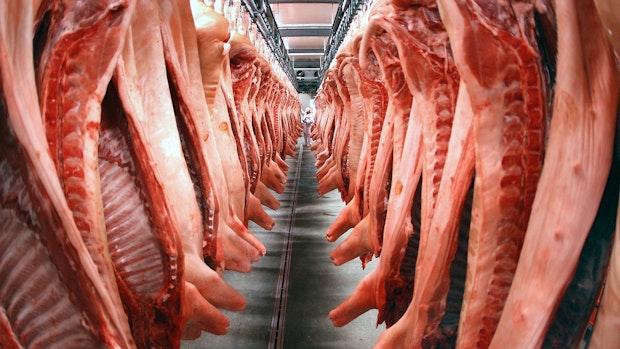 Experte: Noch keine Notschlachtungen bei Schweinen
