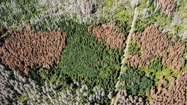 Niedersachsens Wälder stärker geschädigt als angenommen