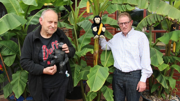 Warum ein Haverbecker in seinem Garten Bananen ernten will