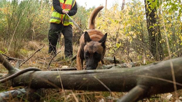 Suchhund findet vermissten 11-Jährigen