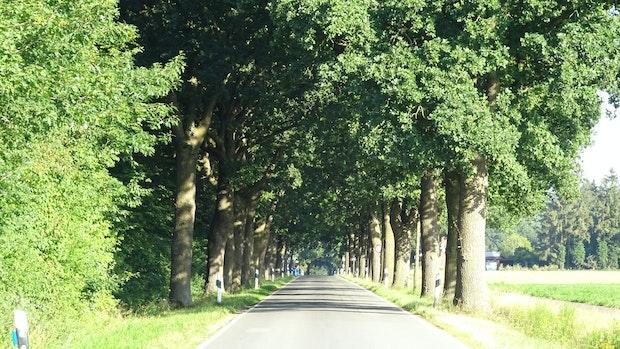 Kommunalpolitiker wollen Abholzung verhindern