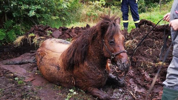 Feuerwehr rettet Pferd aus Morast