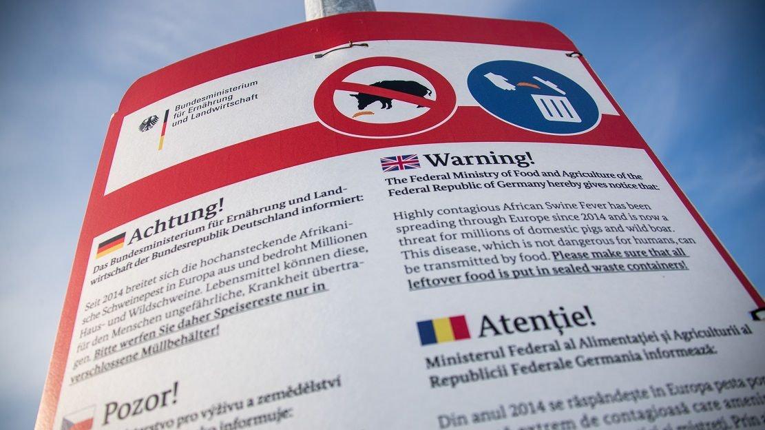 Die Afrikanische Schweinepest droht sich in Brandenburg auszubreiten. Foto: dpa/Büttner