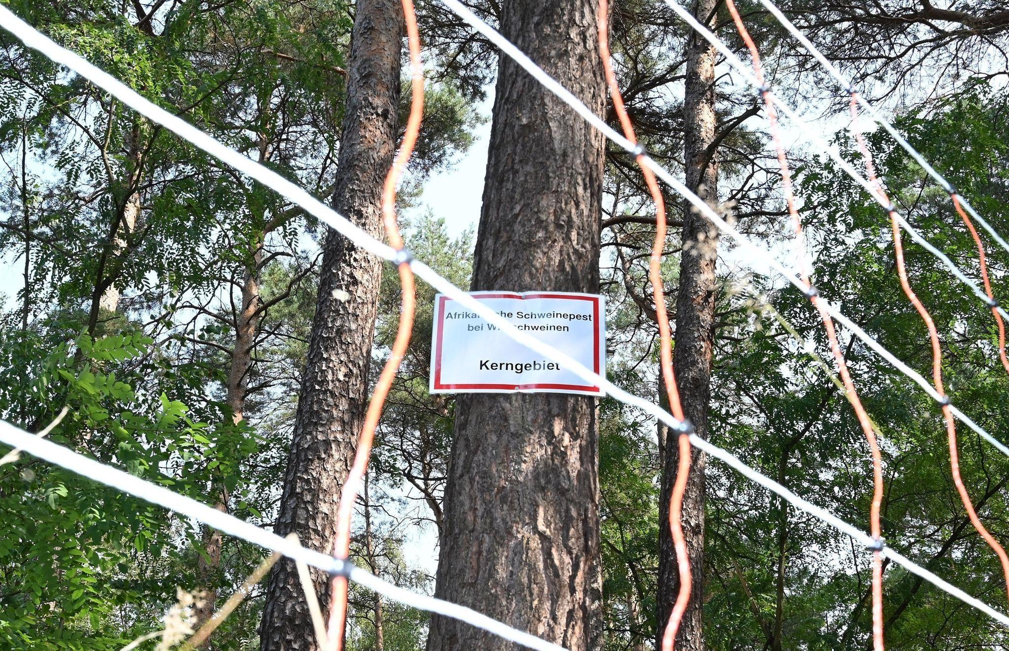 """Schild mit der Aufschrift """"Afrikanische Schweinepest bei Wildschweinen Kerngebiet"""": Die Afrikanische Schweinepest droht sich in Brandenburg auszubreiten. Foto: dpa"""