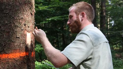 Der Wald im Oldenburger Münsterland wird für den Klimawandel fit gemacht