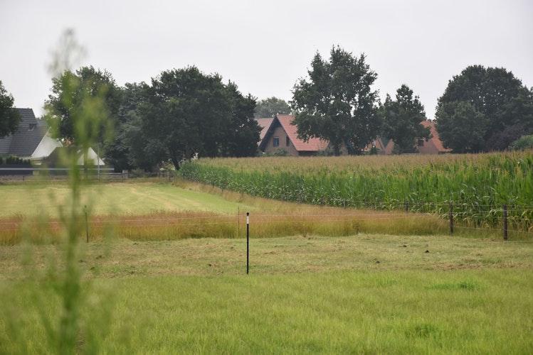 Dort, wo jetzt noch der Mais in die Höhe wächst, könnten perspektivisch 12 Bauplätze mit bis zu 26 Wohnungen entstehen. Foto: Timphaus