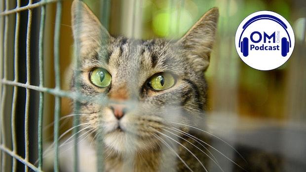 14. Episode des OM Online Podcasts: Pandemie-Tiere und Katzenschwemme