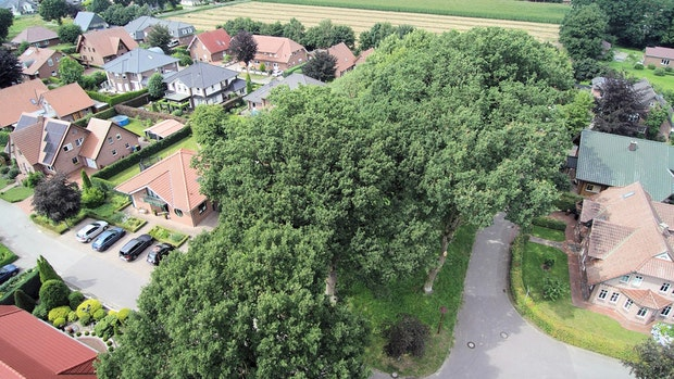 Bäume in Bösel bleiben: Gemeinde legt Änderungspläne zu den Akten