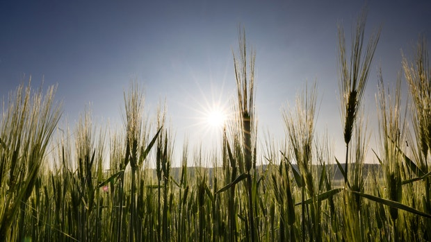 Bundestagswahl: Das sagen die OM-Bewerber zum Thema Landwirtschaft