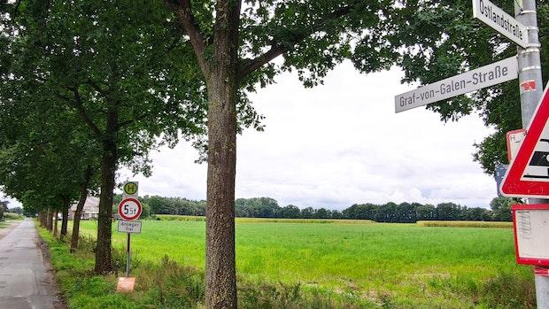 Feldlerchen durchkreuzen Volksbank-Vorhaben in Steinfeld