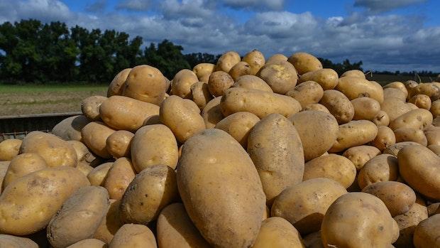 Auf Niedersachsens Äckern läuft die Kartoffelernte
