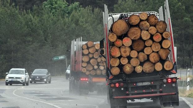 Teures Bauholz: Bundesregierung lehnt geforderten Exportstopp ab