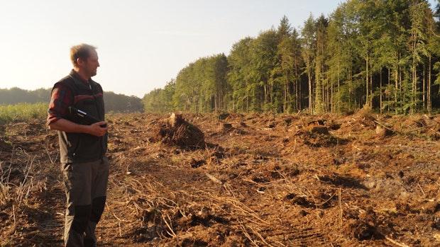 Arbeiten im Herrenholz sorgen für Irritationen