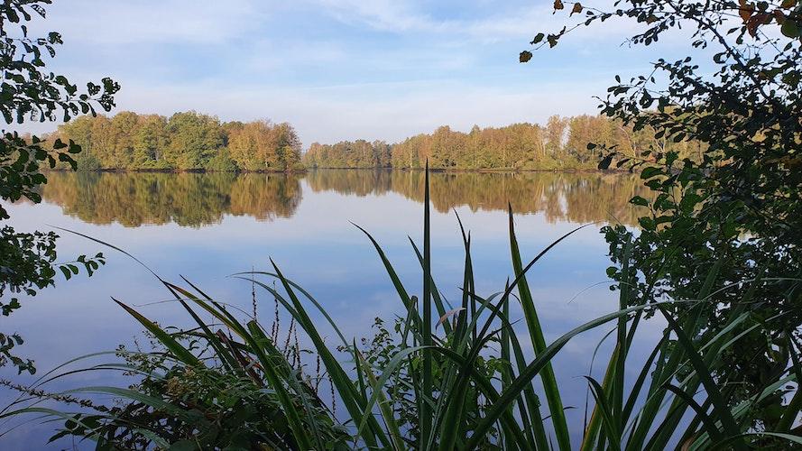 Die Landschaftspflege ist eine der Aufgaben des Zweckverbandes Erholungsgebiet Thülsfelder Talsperre. Foto:S. Muth, ZVETT