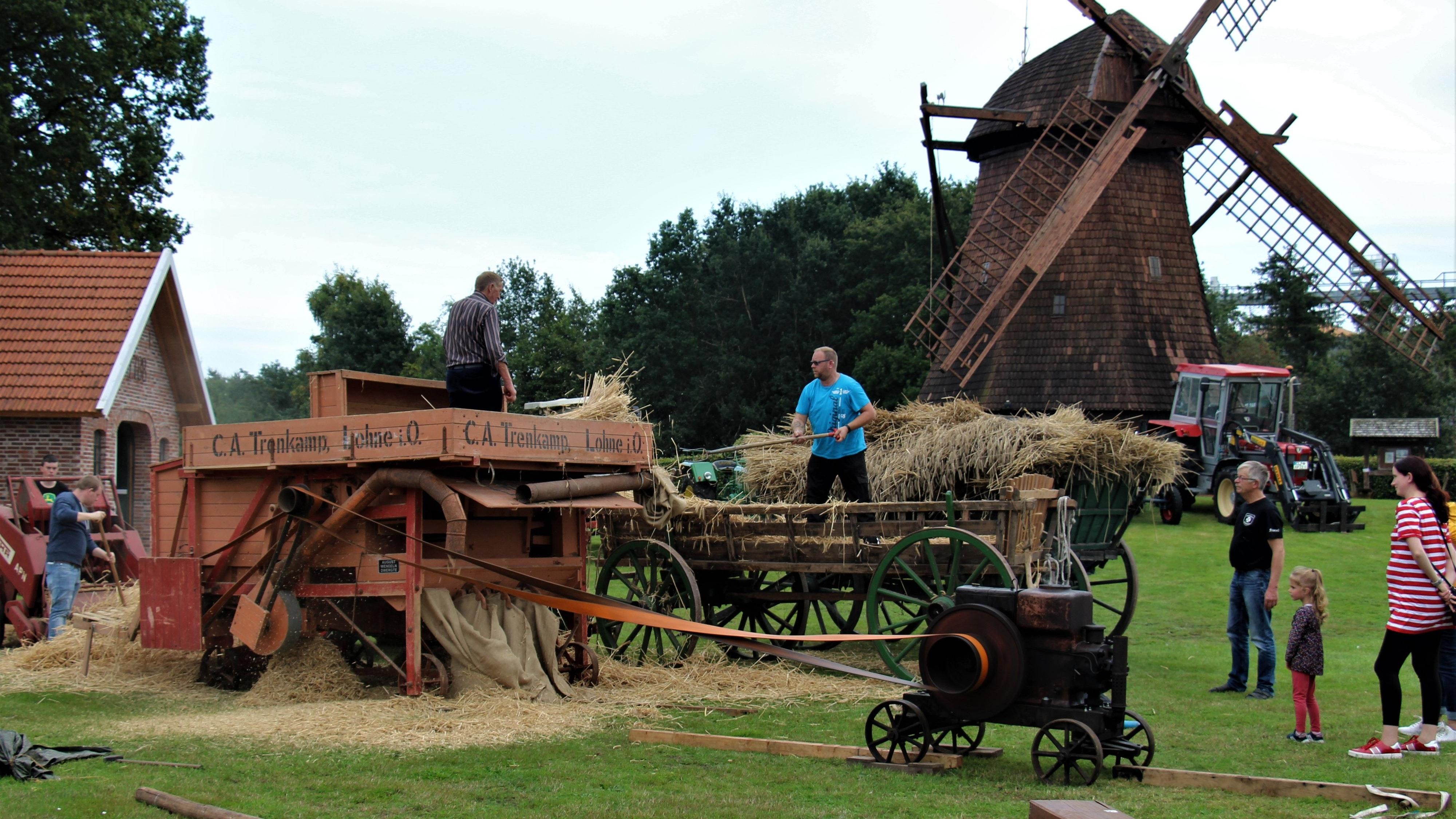 Landwirtschaft wie in den 1950er Jahren: Die zuvor getrockneten Roggengarben werden in einer Dreschmaschine verarbeitet. Für den Antrieb sorgt ein alter Dieselmotor über einen langen Treibriemen. Fotos: Funke