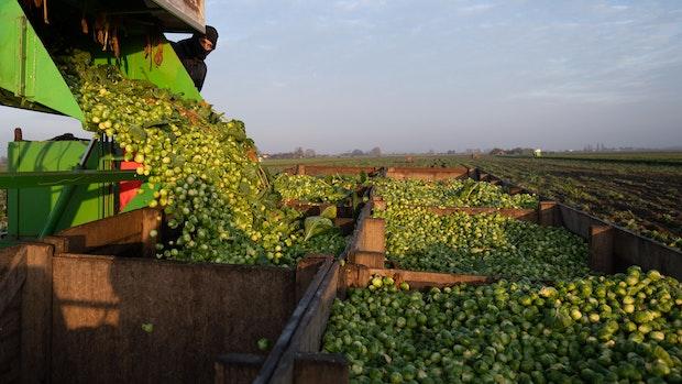 Was bringt ein Kompass für klimabewussten Lebensmittelkauf?