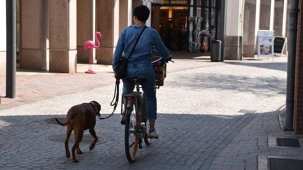Stadt verdient 66.519 Euro mit Hundesteuer